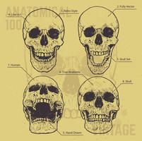Jeu de vecteur de crânes anatomiques