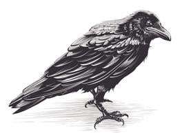 Vector Crow arte en blanco