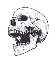 Anatomische schedel Vector