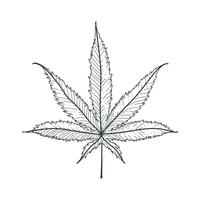 Vector Marijuana Leaf