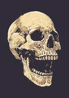 Anatomische Grunge-schedel