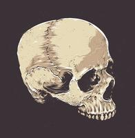 Anatomic Grunge Skull