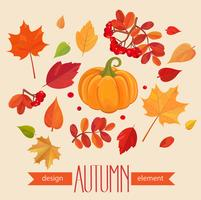 Color autumn leaves and pumpkin. vector