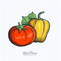 Hand Drawn Fruit & Vegetable Illustration