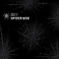 Vector Spider Webs on Black Background