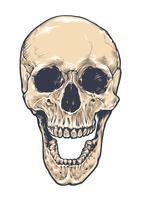 Crâne anatomique grunge