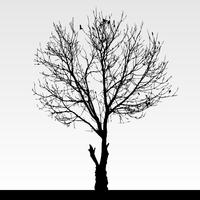 Dry dead tree silhouette.  vector