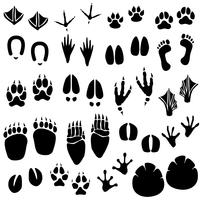 Animal Footprint Track Vector.