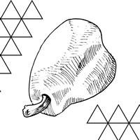 Vector and sketch hand drawn vintage pear