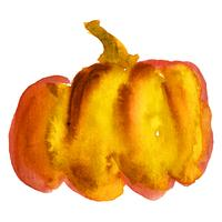 Watercolor image of pumpkin with stem on white background