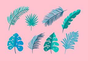 Set of vector isolated flat leaves palm, exotic on pink background