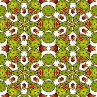 Kaleidoskop der Sukkulenten.