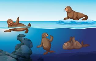 Scène de l'océan avec quatre phoques nageant