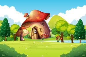 Champignons maison dans le champ