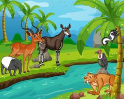 Wild animals standing by the river