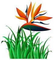 Fiore di uccello del paradiso nel bush