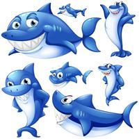 Blå hajar i olika positioner