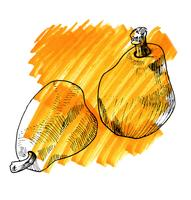 vintage pear watercolor and sketch