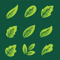 Green Leaves Collection Vector Set
