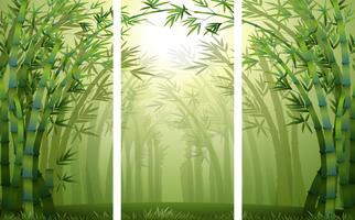 Cenas de floresta de bambu com névoa