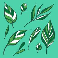 Hand Drawing Manual Green Leaves Clipart Set Vector