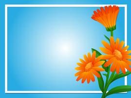 Border template with orange calendula
