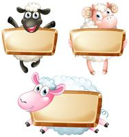 Three blank signs with cute sheeps