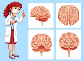 Doctor and brain diagrams