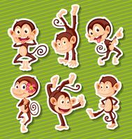 Monkeys set