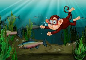 En apa som fångar fisk i floden