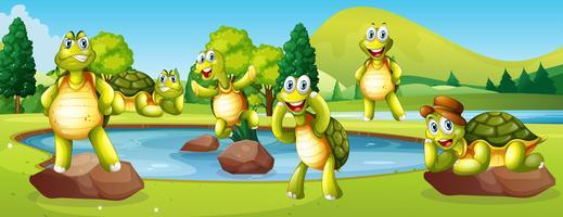 Tortugas en la escena del estanque
