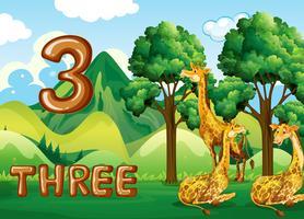 Trois girafes dans la nature