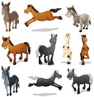 Horses and donkeys in different poses