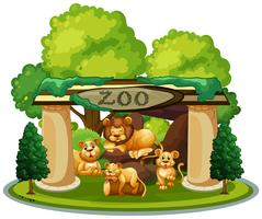 A family of lion in the zoo vector