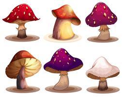 Un ensemble de champignons colorés
