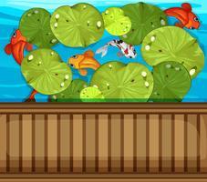 Muitos peixes nadando na lagoa