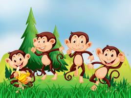 Four monkeys in the field
