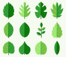 Vector de hojas verdes