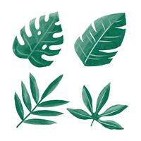 Water Color Tropical Green Leaves Clipart Set Vector