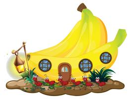Banana house with red ants marching outside