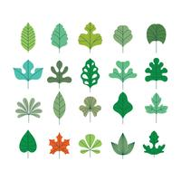 Vector Set of Beautiful  Leaves with Minimalist Style