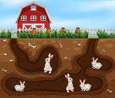 Rabbit House Underground the Farm