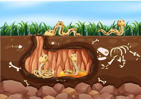 Eine Schlangenfamilie, die im Untergrund lebt