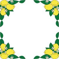 Tropical citrus lemon fruits with flowers frame. Summer colorful background. Vector illustration.
