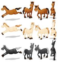 Set di cavalli