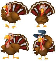 Turkey set vector