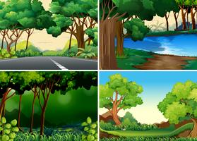 Forests vector