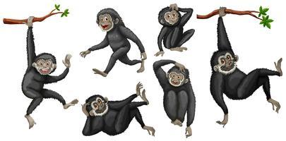gibbon set