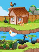 Escena de la granja con patos y gallinas.
