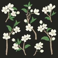 Blooming tree. Set collection. Hand drawn botanical white blossom branches on black background. Vector illustration
